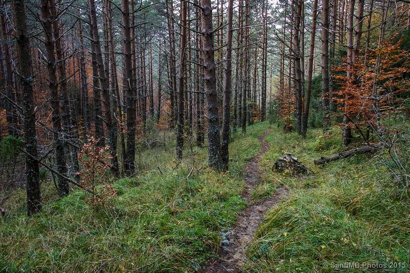 Camino de bajada por Belaibarra