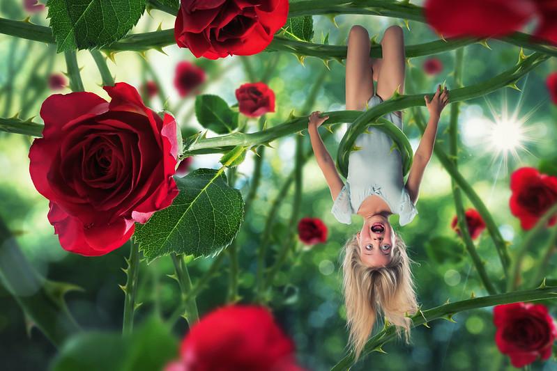 The rose's revenge