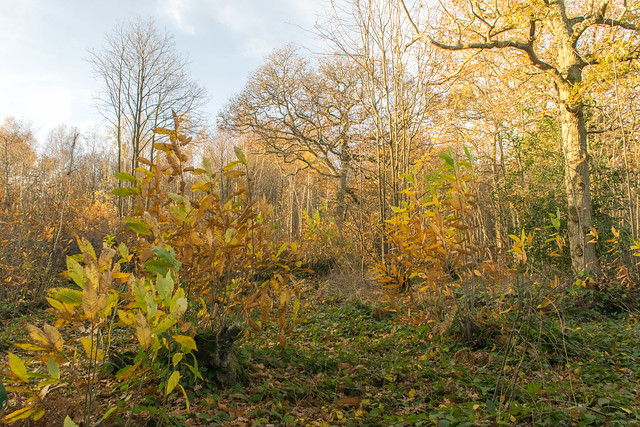 DSC_5459 Autumn woodland