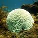 pristine brain coral key west sailing adventure