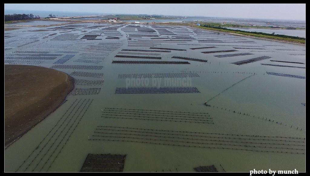 搶救回來的七股濕地,成為國際級濕地。
