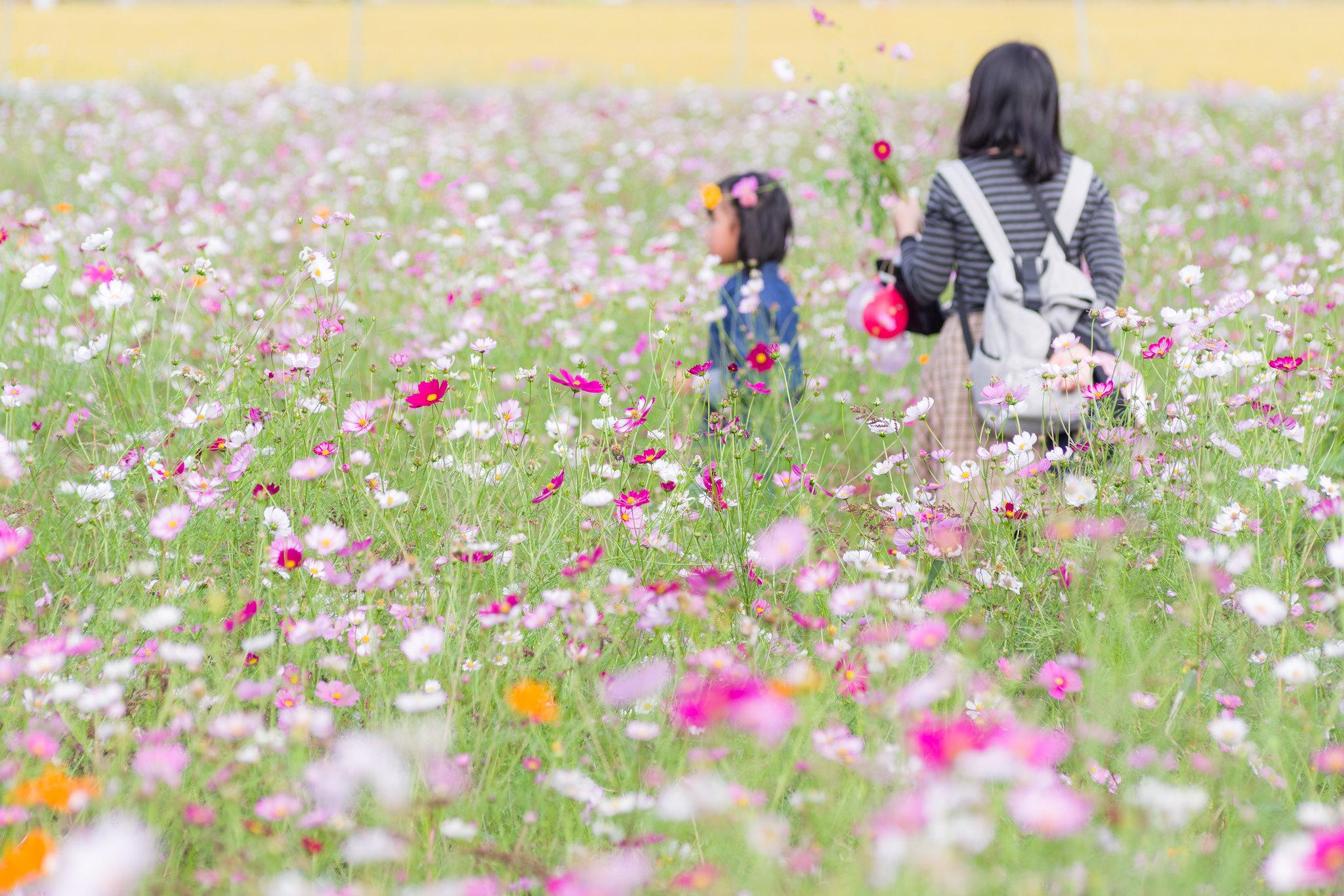花を摘み歩く