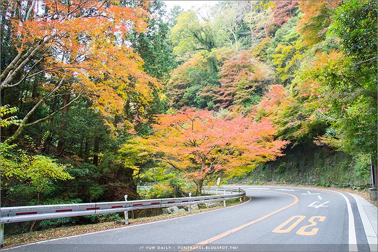 大阪自由行︱慢步箕面市山林.原來山中才是真正的楓林祕境