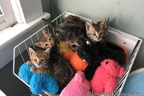 Carolinas Kittens