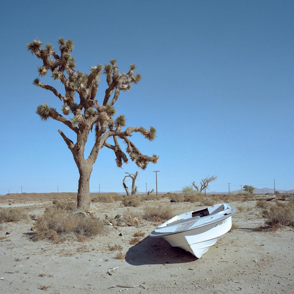 Mojave Desert Native Plants: Pleasure Cruise. Mojave Desert, Ca. 2016.