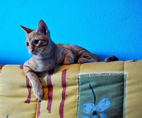 Jerry, gatito rubio guapo muy dulce y bueno, esterilizado, nacido en Abril´15 en adopción. Valencia. ADOPTADO. 20828328413_de5bbc3228