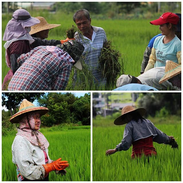台灣農業世代與其說老齡化,更大的問題是斷層。攝影:廖靜蕙