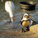 Penguin Cove at Banham Zoo