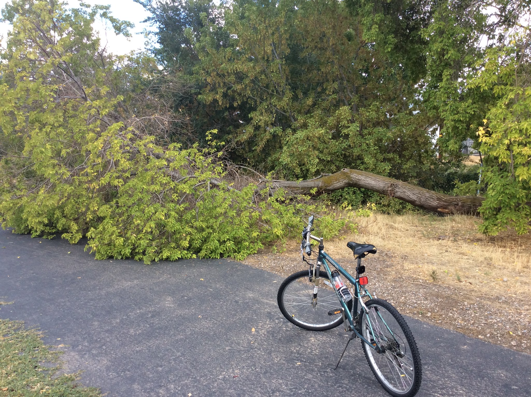This tree fell on our bike path during the storm
