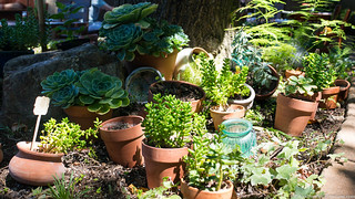 backyard forestville flickr photo sharing