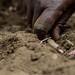 Rwanda seed systems