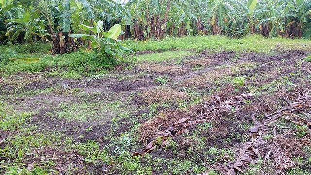 黃俊男的以時農田,整出了一片菜圃。攝影:黃俊男。