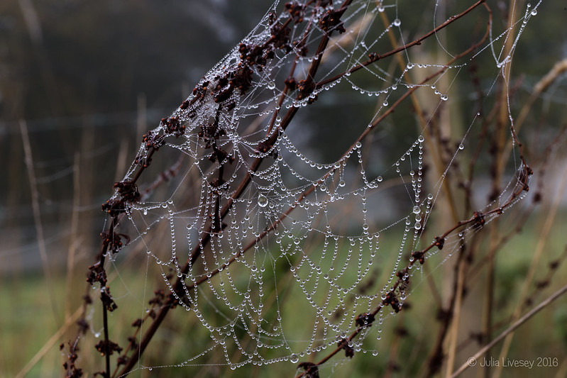 Bejewelled web