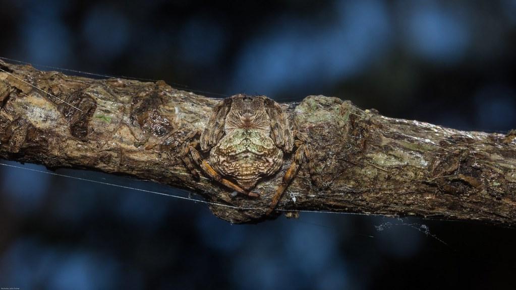 N Spiders wrap-around spider | b...