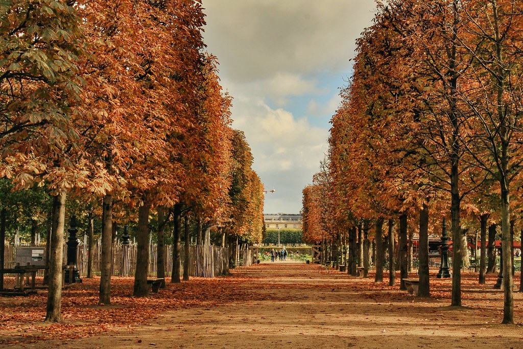 Autumn in Paris - Jardin des Tuileries, Paris