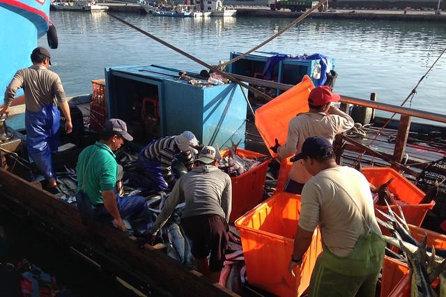 正確登錄撈捕資料,對於海洋永續及消費者都有保障。攝影:廖靜蕙