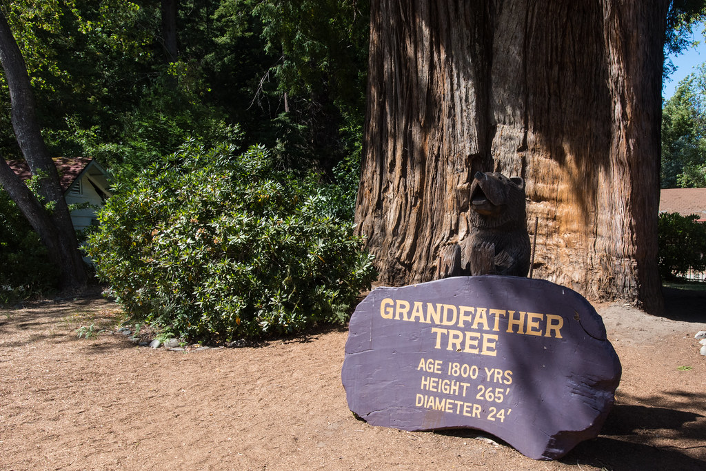 grandfather tree weird roadside attractions northern california