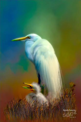 Image of a Snowy Egret and a Chick at the St. Augustine Alligator Farm Rookery