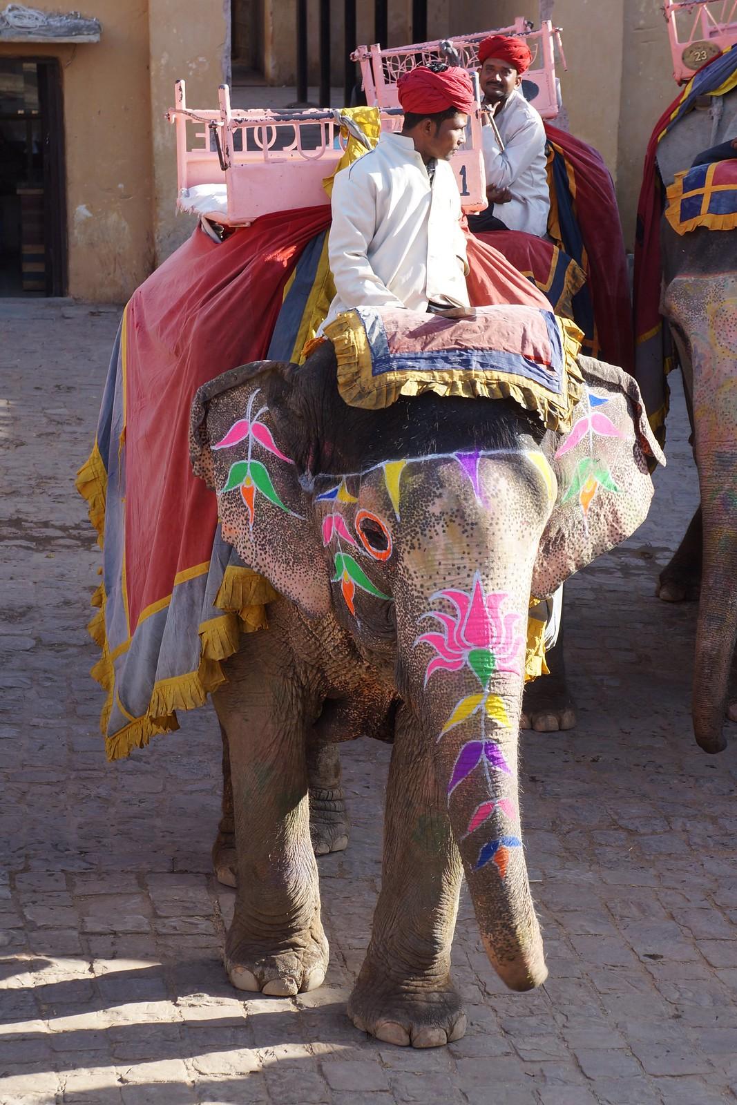 Holi Elephant