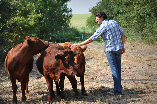 Jonathan Cobb with cattle
