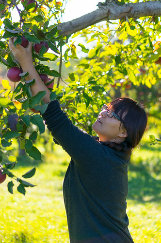 A woman picking apples