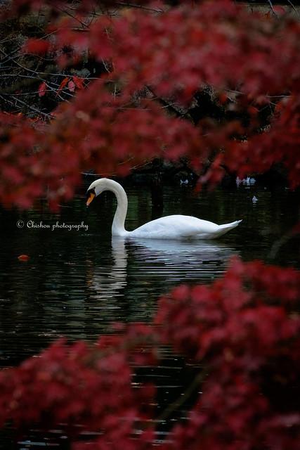 autumnal tints(2016.November)