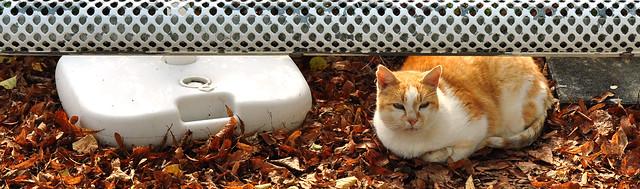Bad Schönborn im Landkreis Karlsruhe (Baden-Württemberg): eine dösende Katze in der Oktobersonne, Blick ins Kaninchengehege des Kleintierpark - und lecker Kuchen zu Viert ... Fotos und Collagen: Brigitte Stolle 2016