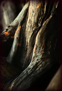 within a dark wood ... | by paloetic