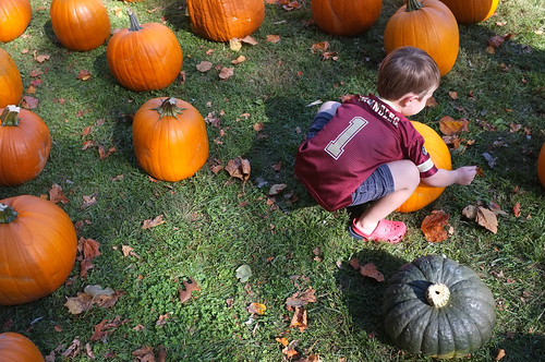 Picking the perfect pumpkin | by dcJohn