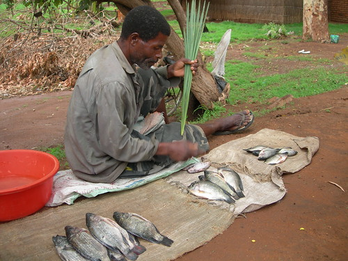 Fish farmer selling his catch, Zomba, Malawi. Photo by Asafu Chijere, 2010