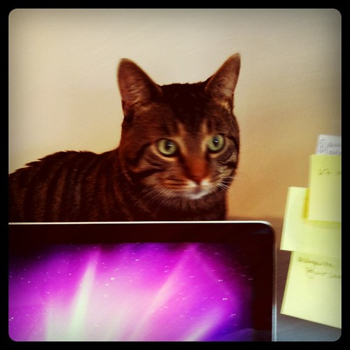 Office cat. He knows them invoices. | by sassyradish