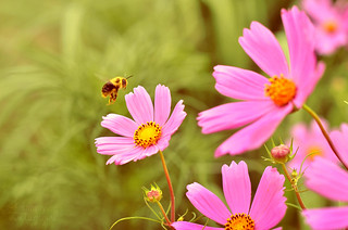 Bee | by Simply Vintagegirl