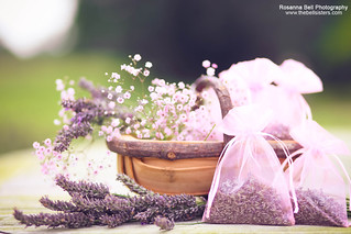Lavender Harvest - Day 235/365 | by Rosanna L'Estrange-Bell
