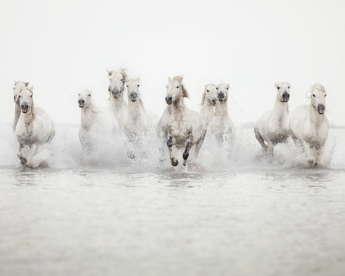 The power of 10 - Horse Photograph | by IrenaS