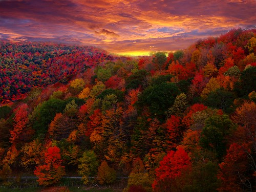 Fall Foliage Photography | by ForestWander.com