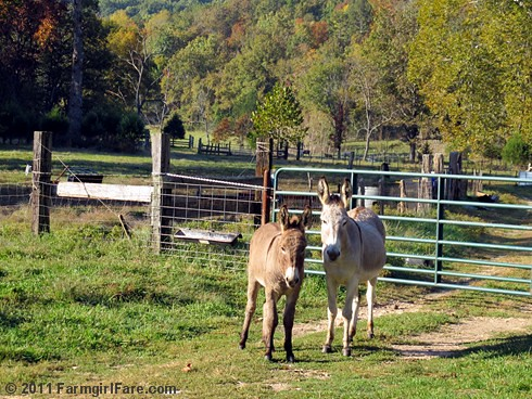 Gus and Daphne with autumn color backdrop | by Farmgirl Susan