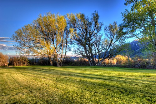 Lawn near Mono Lake | by Daniel J. Mueller