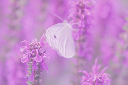 Image Result Forerfly And Flower