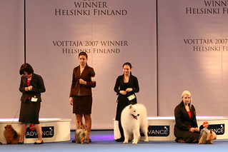 On the Dog Show Stage | by Tomi Tapio