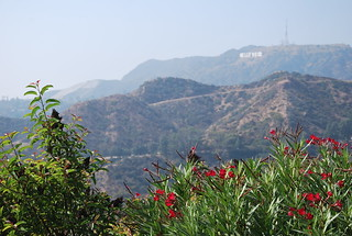 Hollywood Sign | by PilotGirl