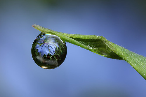 Flower dewdrop refraction #1 | by Lord V