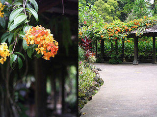 Walkway with Flowers | by Xiaolu // 6 Bittersweets