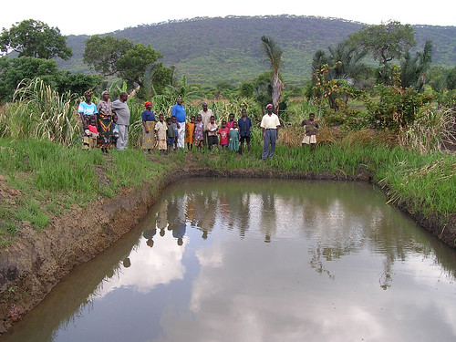 Fish pond , Malawi. Photo by Diemuth Elisabeth Pemsl, 2008