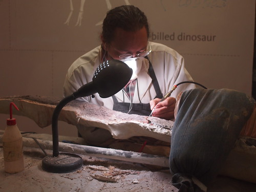 Glenn is working on a saurapod vertebra from Utah | by Anika Malone