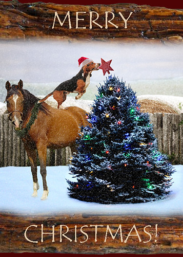 christmas card_charlie | by sunshine_4_jt