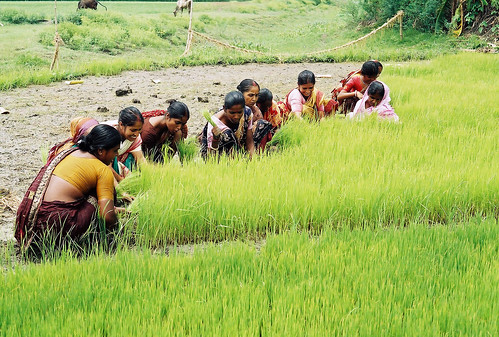 Women in farming and fisheries, Bangladesh. Photo by CBFM-Fem Com Bangladesh, 2006