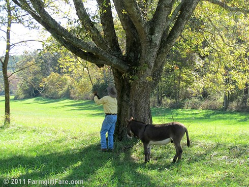 Swinging with Donkey Doodle Dandy 1 | by Farmgirl Susan