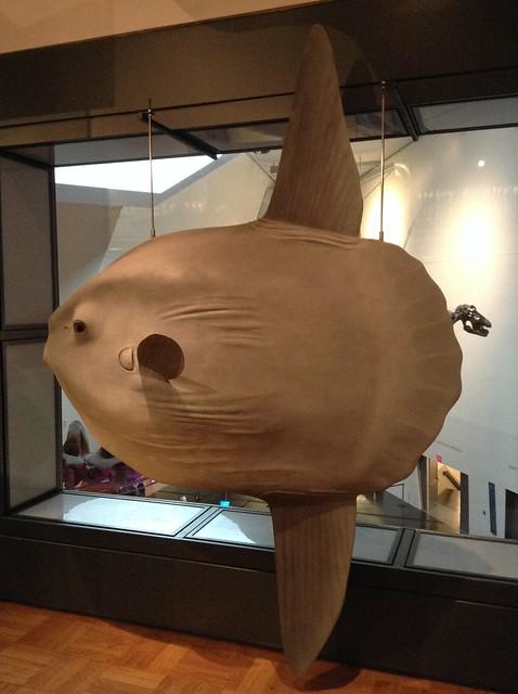 Royal Ontario Museum Natural History galleries