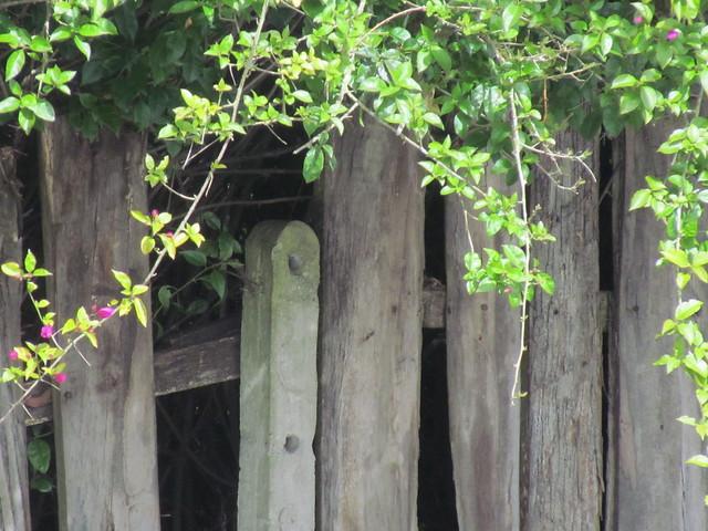 Cercas de madera flickr photo sharing - Cercas de madera ...