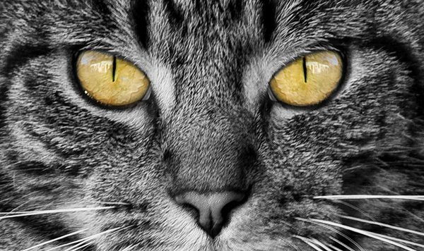 Cats Eyes Change With Mood